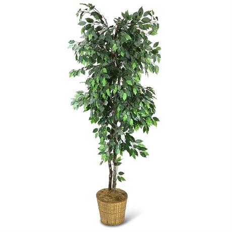 Faux Ficus
