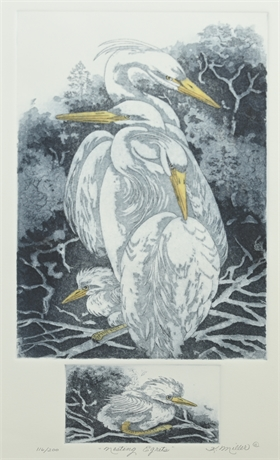 """""""Nesting Egrets"""" Etching by K.Miller"""