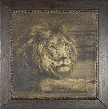 """Resting Lion"" Print"