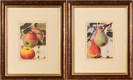 Framed Fruit Prints