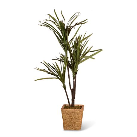 Faux Potted Dragon Tree