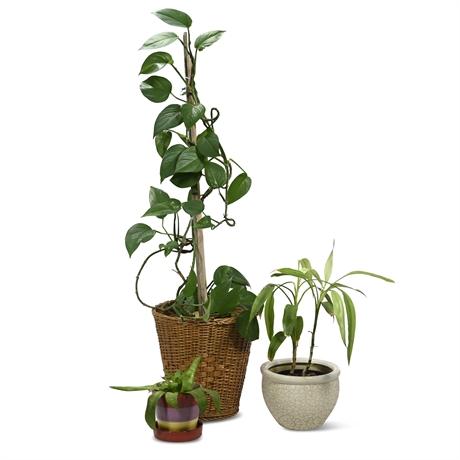Live Potted Plants