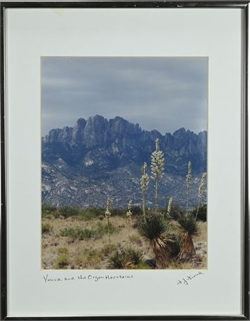 Yucca and the Organ Mountains