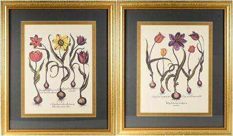 Basilius Besler Framed Prints