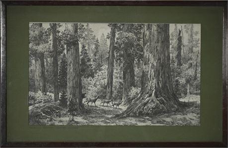 Humboldt Redwoods State Park CA Framed print