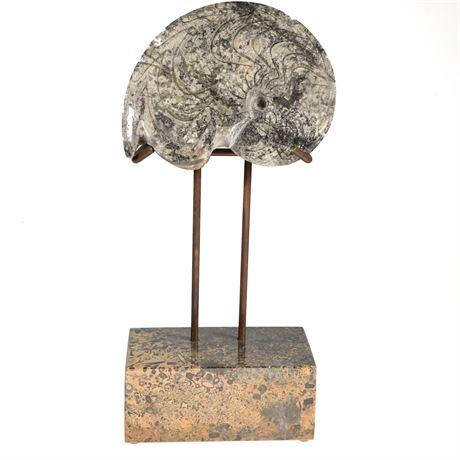 Fossilized Ammonite