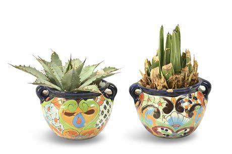 Live Potted Succulents